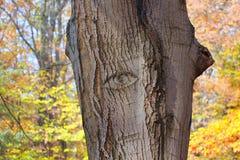 树眼睛 图库摄影