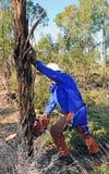 树砍伐在玉树森林里与锯,韦尔瓦省省,西班牙的 库存图片