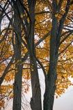 树秋天成套装备  叶子的明亮的颜色 库存照片