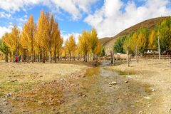 树秋天视图在岛城县 免版税库存照片