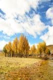 树秋天视图在岛城县 免版税图库摄影