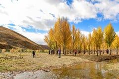 树秋天视图在岛城县 库存图片