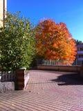 树秋天 库存图片