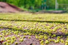 树种子在地面上的在春天,唤醒自然 免版税库存图片