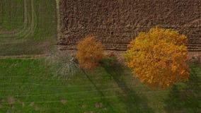 树空中射击在树篱,充满活力的秋天叶子的 股票录像