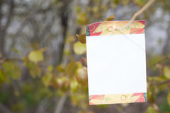 树空白 免版税图库摄影