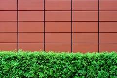 树篱和布朗铺磁砖了墙壁 免版税库存照片