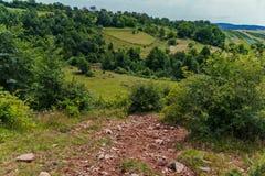 树篱围拢的绿色倾斜的农村土地 使用已经被割的去在他们之间的草和道路 库存照片