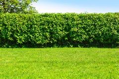 树篱在庭院里 库存照片