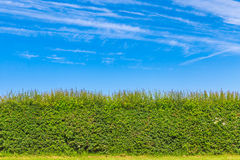 树篱在英国乡下 库存图片