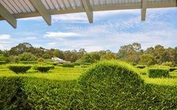 树篱迷宫:高的看法 免版税图库摄影
