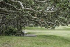 树粗糙和扭转的分支在给a的公园长椅的 免版税库存照片