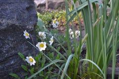树精花 庭院的石头 库存图片