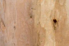 树纹理吠声木头背景 库存照片