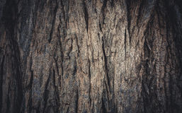 树纹理和背景吠声  库存照片