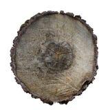 树纹理的横断面 免版税图库摄影
