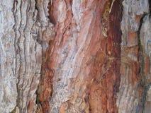树纹理的Closeu 库存图片