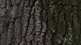 树纹理背景 免版税库存照片