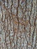 树纹理吠声  库存照片