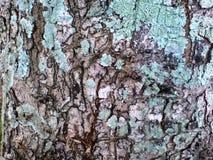 树纹理 库存照片