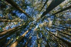 树纹理 免版税库存照片