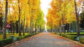 树线路散步,在秋天leavs盖的avenua走道 免版税库存照片