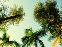 树绿色黄色天空 免版税库存照片