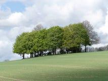 树美丽的小灌木林在绿色领域,拉蒂默,白金汉郡的 免版税库存图片