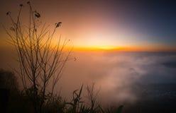 树美好的分支和有雾的日出早晨环境美化 免版税库存图片