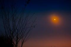 树美好的分支和有雾的日出早晨环境美化 免版税图库摄影