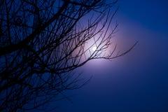 树美好的分支和有雾的日出早晨环境美化 免版税库存照片