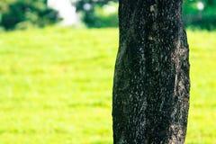 树背景在泰国的公园 库存照片