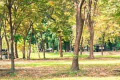 树背景在泰国的公园 免版税库存照片