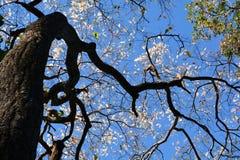 树背景天空 免版税库存图片