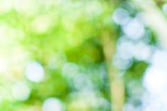 从树背景的抽象自然绿色bokeh 免版税图库摄影