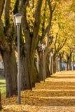 树胡同和五颜六色的秋叶 免版税图库摄影