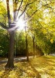 树胡同在秋天在城市公园 免版税图库摄影