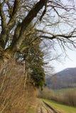 树自然和分支在冬季1月 免版税库存图片