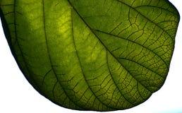 树自然本底照片的绿色叶子 免版税图库摄影