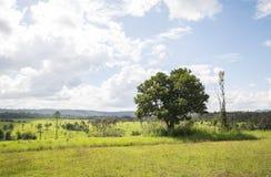 树自然白天桐树萨朗Luang国家公园 Khao Kho酸碱度 库存图片
