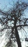 树自然 库存照片