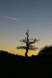 树舞蹈家 库存图片