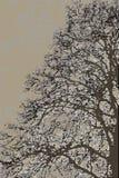 树艺术 免版税库存图片