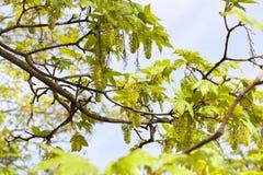 树花  免版税库存照片