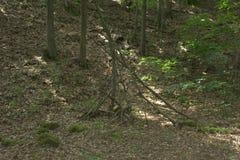树苗和某一其他裁减了分支,并且木头由孩子汇集形成可能使用作为发球区域的结构 免版税图库摄影