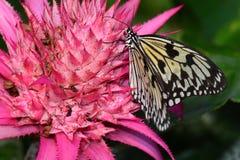 树若虫蝴蝶在他的桌上在庭院里 库存照片