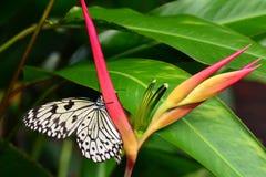 树若虫蝴蝶在他的桌上在庭院里 免版税库存图片