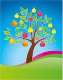 树苹果果子上色明亮 库存图片