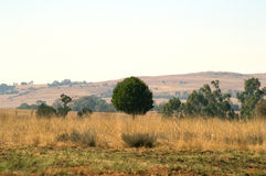 树茂盛 免版税库存照片