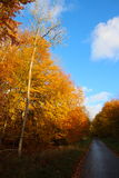 树荫和太阳对比 图库摄影